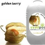 Touch Of Ginger Seedpod Golden Berry Cape Gooseberry