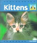 Kittens (Baby Animals)