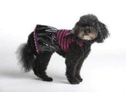 Bret Michaels Pets Rock Bat Dress Costume Size XS