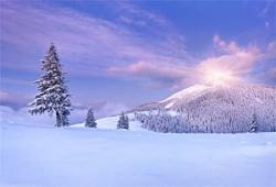 Aofoto 8X6FT Snowfield Backdrop Winter Forest Snow Trees Photo Shoot Background Natural Scenic Sunlight Photography Studio Props Artistic Portrait Whi