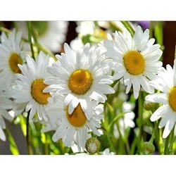 Norbi Diamond Painting Daisy Diy 5D Diamond Painting By Number Kits Crystal Rhinestone Diamond Embroidery Paintings Pictures Wall Art Decor Home Wall Decor For